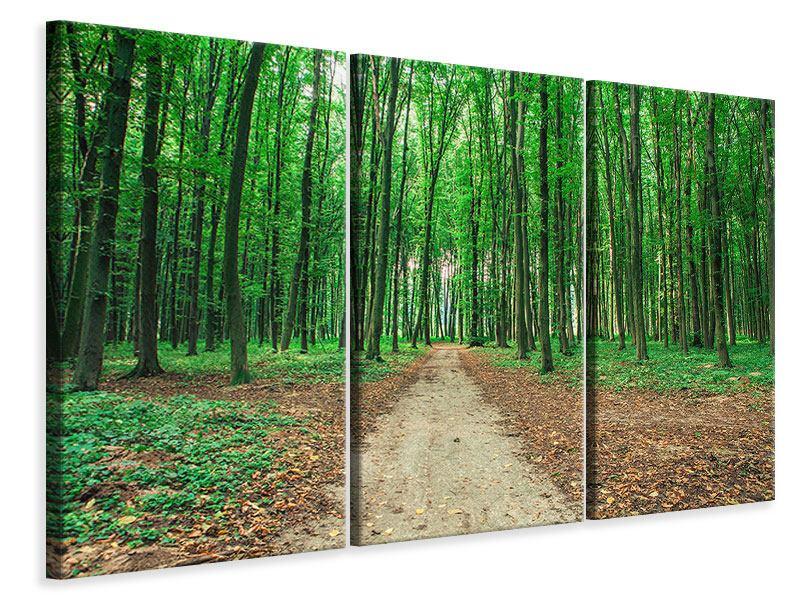 Leinwandbild 3-teilig Tannenwald