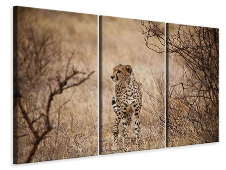 Leinwandbild 3-teilig Eleganter Gepard