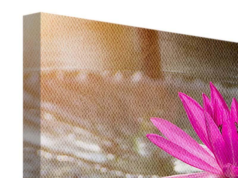Leinwandbild 3-teilig Seerosen im Morgentau