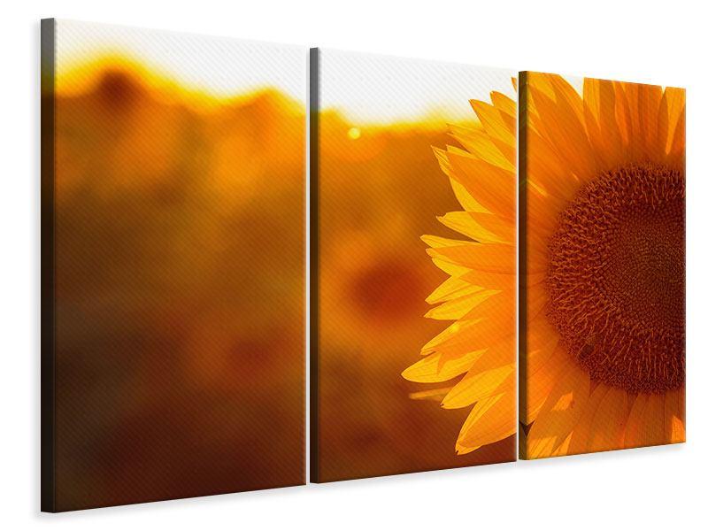 Leinwandbild 3-teilig Macro-Sonnenblume