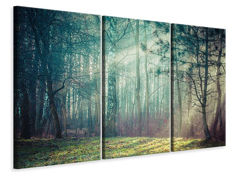 Leinwandbild 3-teilig Pinienwald