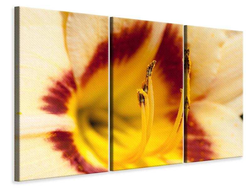 Leinwandbild 3-teilig Riesenlilie