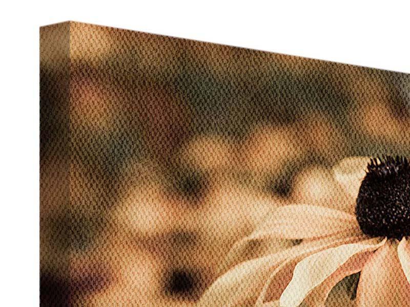 Leinwandbild 3-teilig Margeriten in Sepia