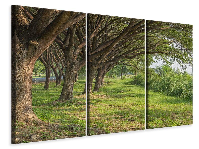 Leinwandbild 3-teilig Alter Baumbestand
