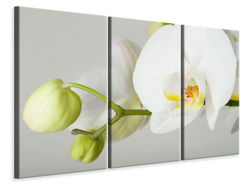 Leinwandbild 3-teilig Riesenorchidee