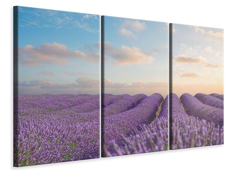 Leinwandbild 3-teilig Das blühende Lavendelfeld
