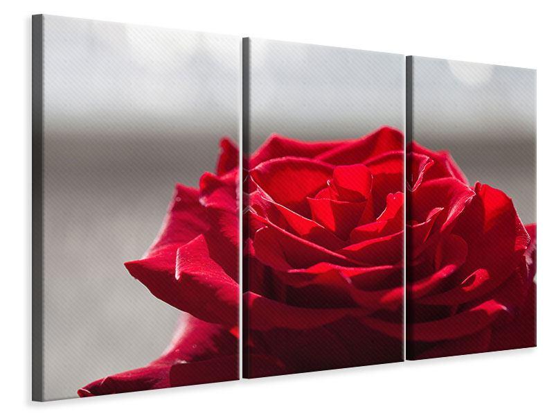 Leinwandbild 3-teilig Rote Rosenblüte