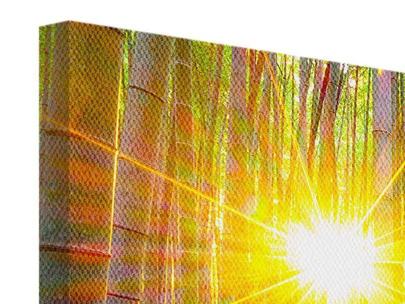 Leinwandbild 3-teilig Bambusse