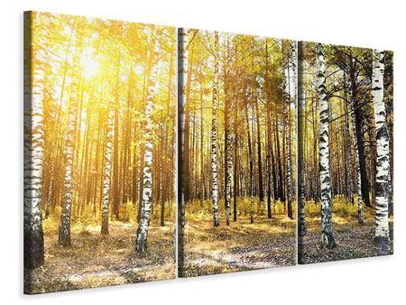 Leinwandbild 3-teilig Birkenwald