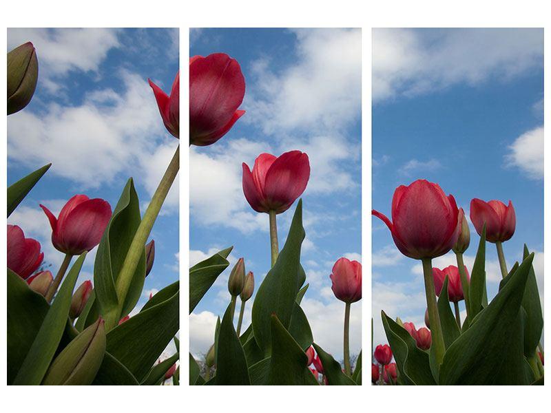 Leinwandbild 3-teilig Tulpen im Himmel