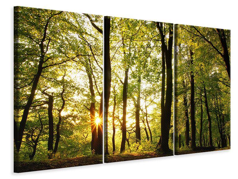Leinwandbild 3-teilig Sonnenuntergang zwischen den Bäumen