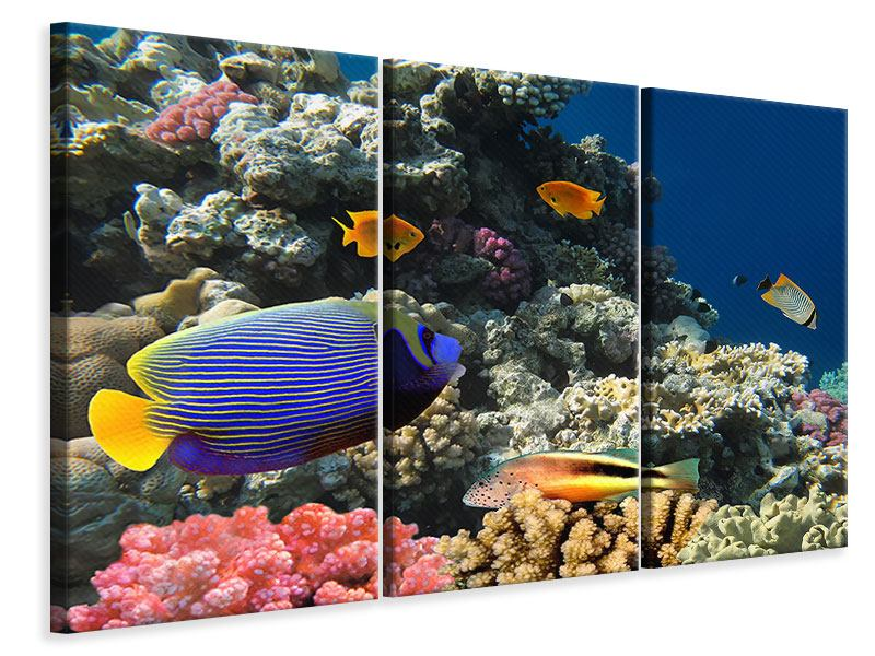 3 Piece Canvas Print The Aquarium