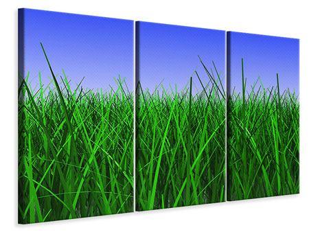 Leinwandbild 3-teilig Im Gras