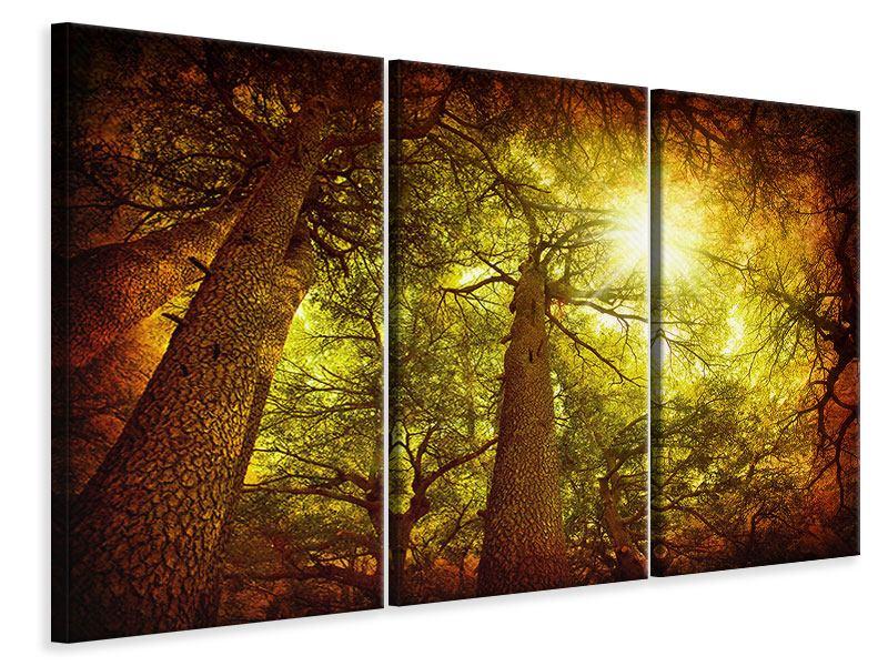 Leinwandbild 3-teilig Cedar Baum