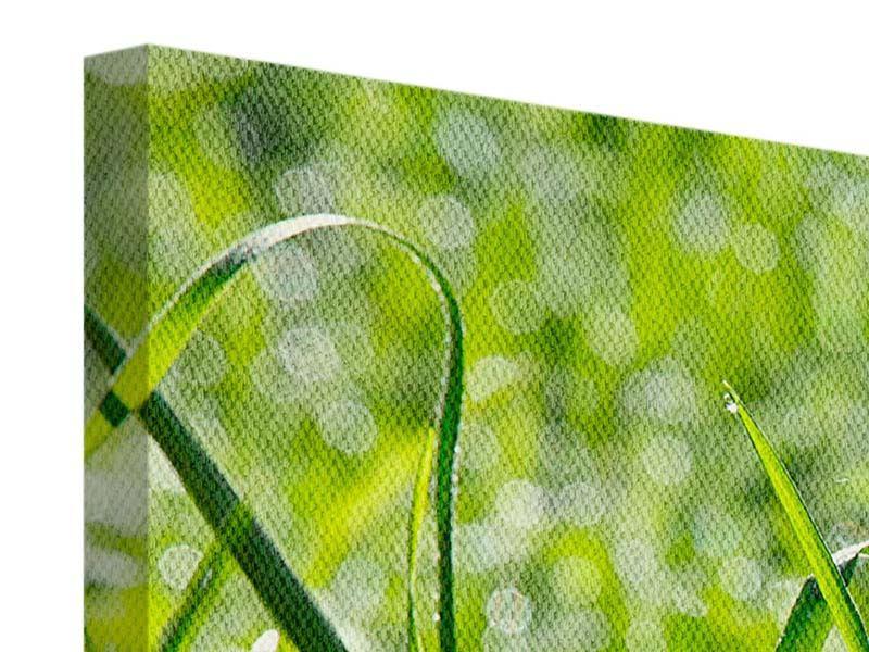 Leinwandbild 3-teilig Sonniges Gras