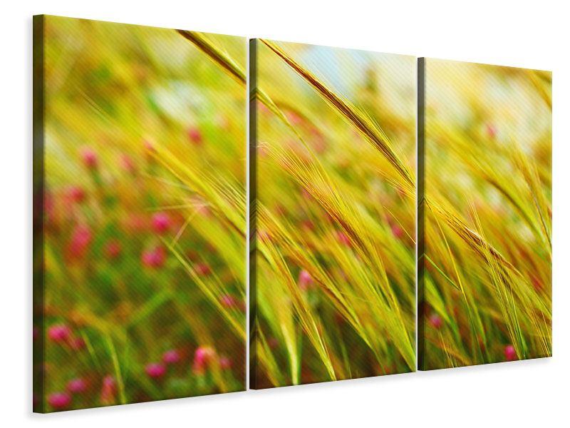 Leinwandbild 3-teilig Das Weizenfeld