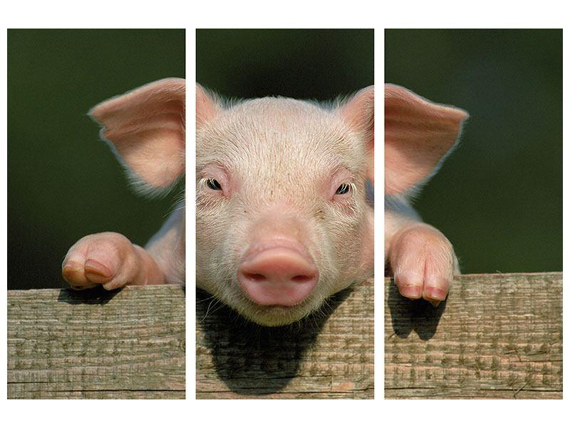 Leinwandbild 3-teilig Schweinchen Namens Babe