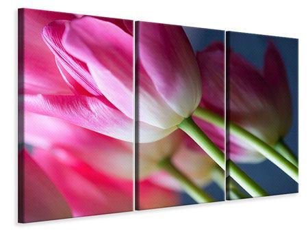 Leinwandbild 3-teilig Makro Tulpen