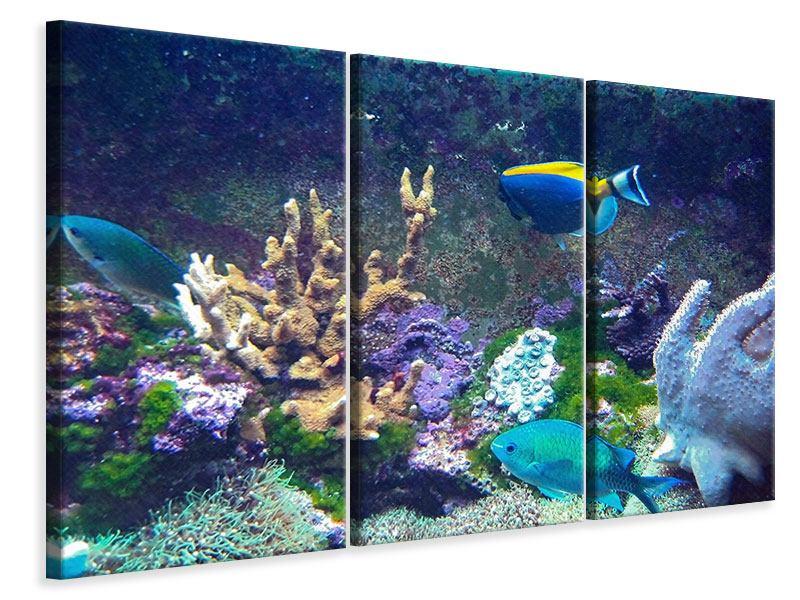 Leinwandbild 3-teilig Fische