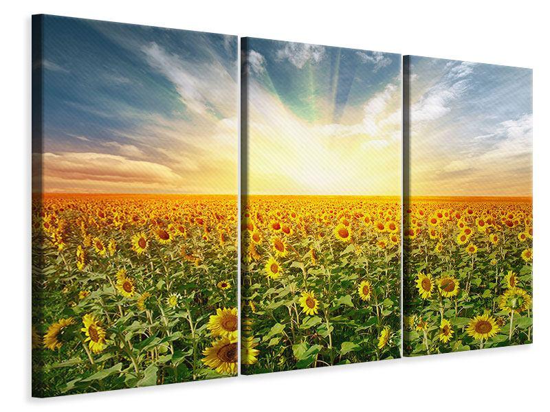 Leinwandbild 3-teilig Ein Feld voller Sonnenblumen