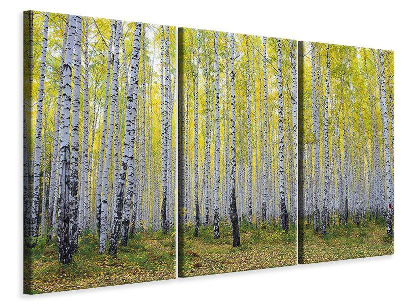 Leinwandbild 3-teilig Herbstlicher Birkenwald