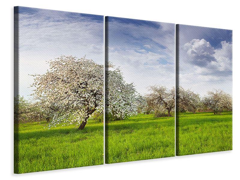 Leinwandbild 3-teilig Apfelbaum-Garten