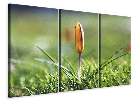 Leinwandbild 3-teilig Die Blütenknospe