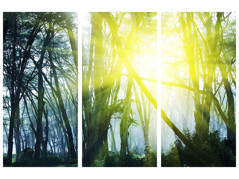 Leinwandbild 3-teilig Sonnenstrahlen im Wald