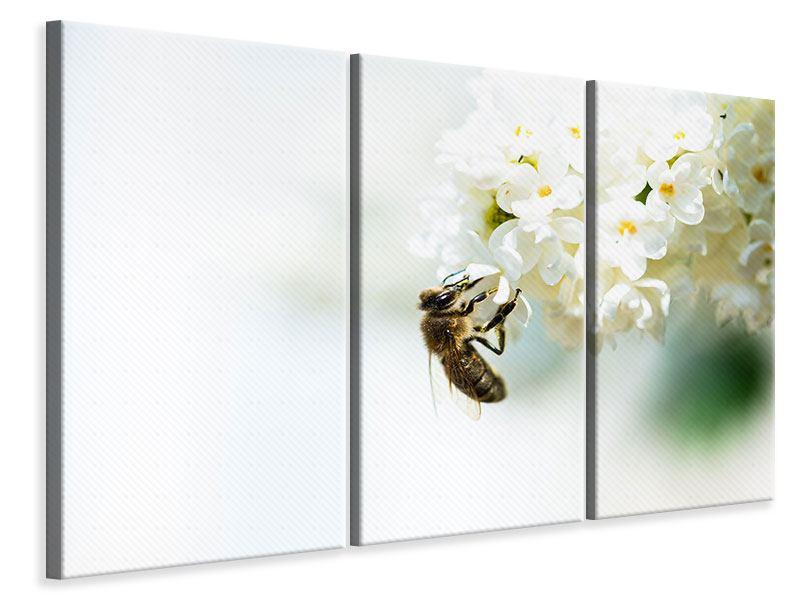 Leinwandbild 3-teilig Die Hummel und die Blüte
