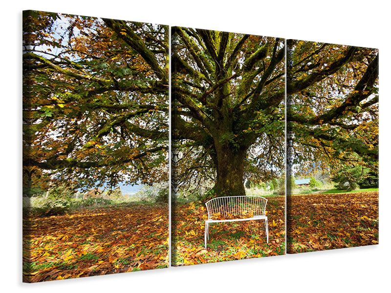 Leinwandbild 3-teilig Mein Lieblingsbaum