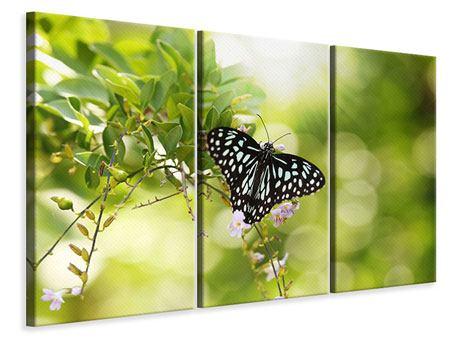Leinwandbild 3-teilig Papilio Schmetterling XXL