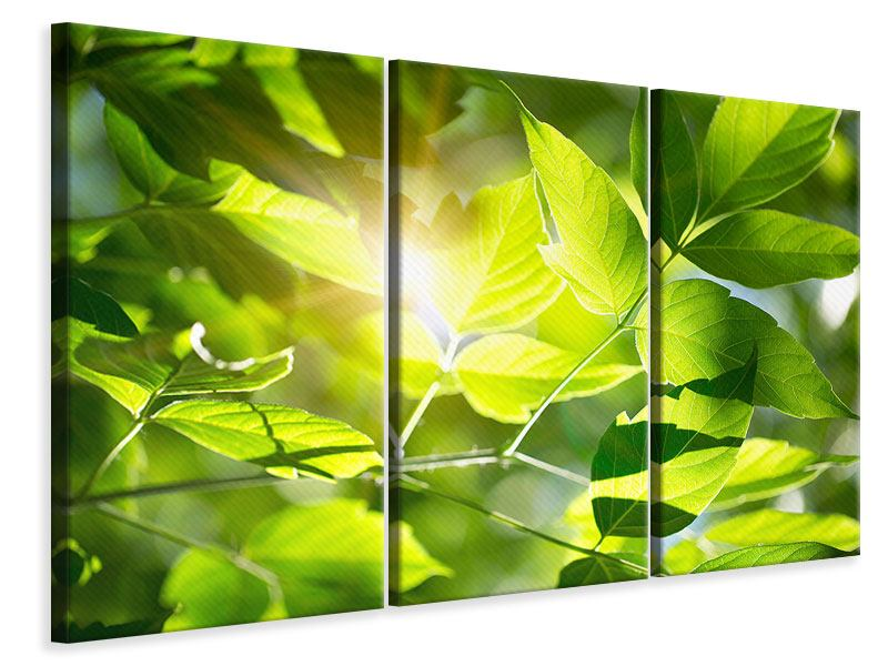 3 Piece Canvas Print Go Green