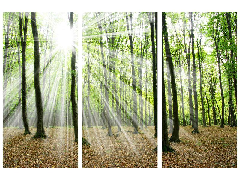 Leinwandbild 3-teilig Magisches Licht in den Bäumen