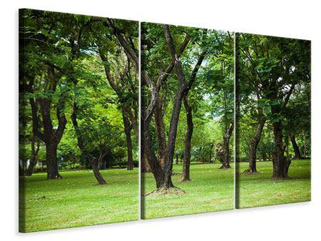 Leinwandbild 3-teilig Kirschbaum-Garten