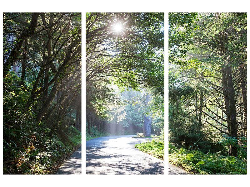 Leinwandbild 3-teilig Sonniger Waldweg