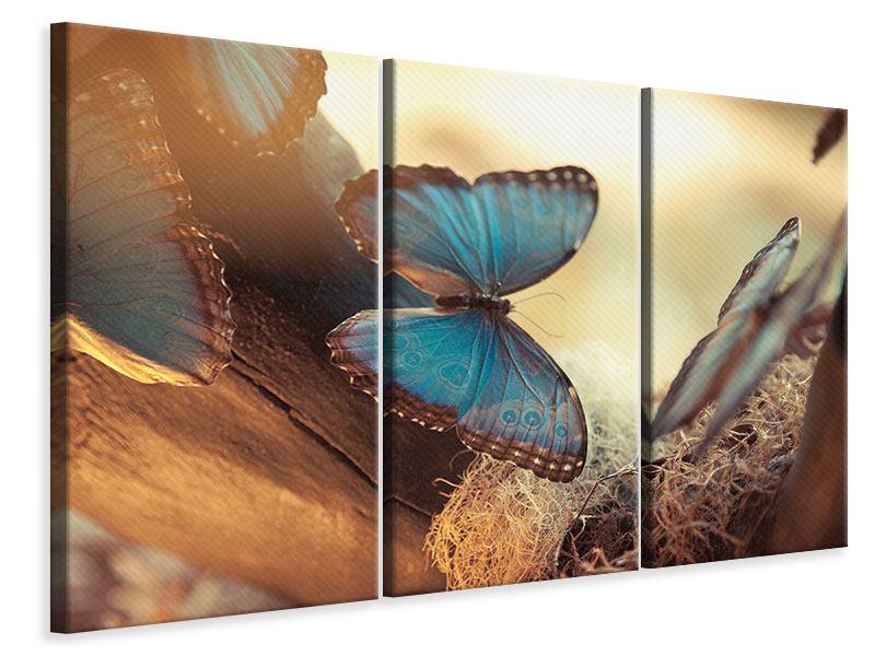 Leinwandbild 3-teilig Schmetterlinge