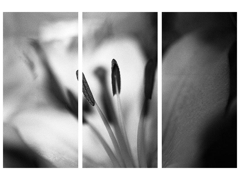 Leinwandbild 3-teilig Makro Lilienblatt