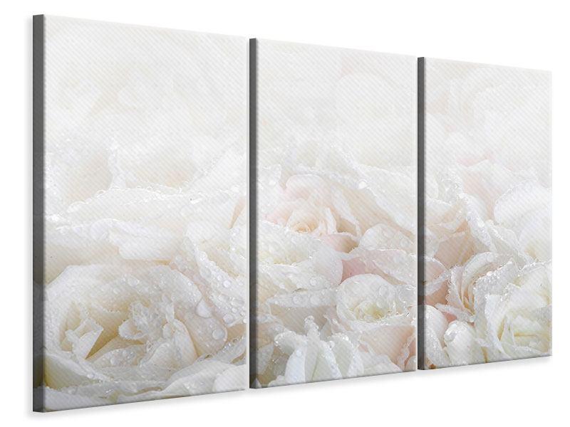 Leinwandbild 3-teilig Weisse Rosen im Morgentau