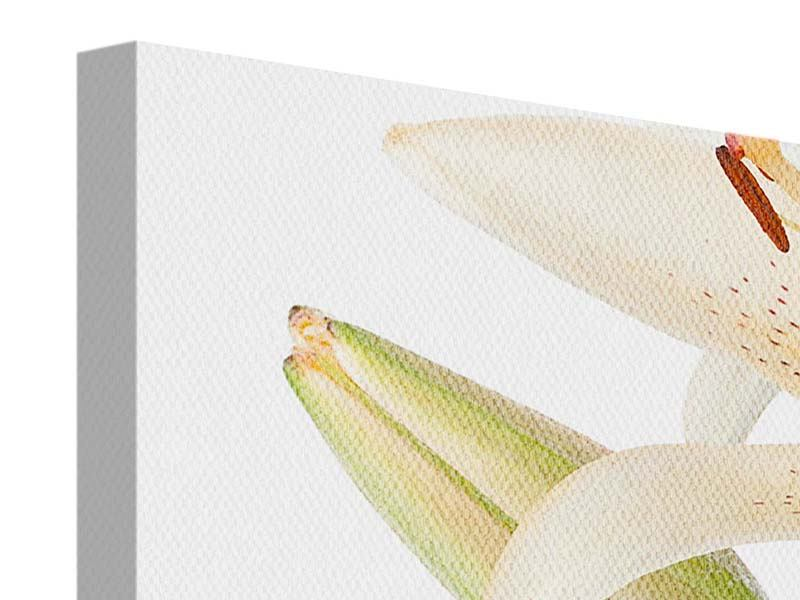Leinwandbild 3-teilig Weisser Lilienstrauch