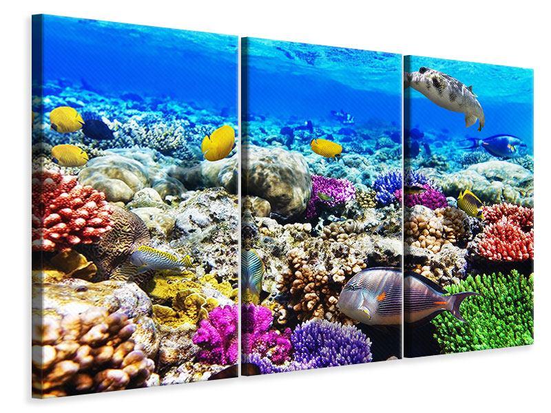 Leinwandbild 3-teilig Fischaquarium