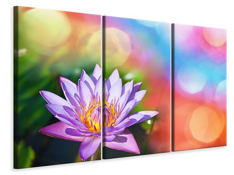 Leinwandbild 3-teilig Colored Lotus