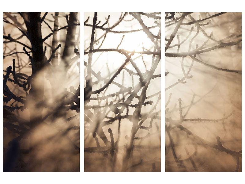 Leinwandbild 3-teilig Äste im Schleierlicht