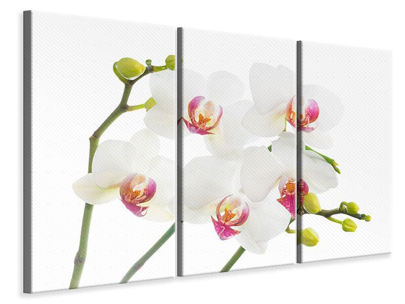 Leinwandbild 3-teilig Orchideenliebe