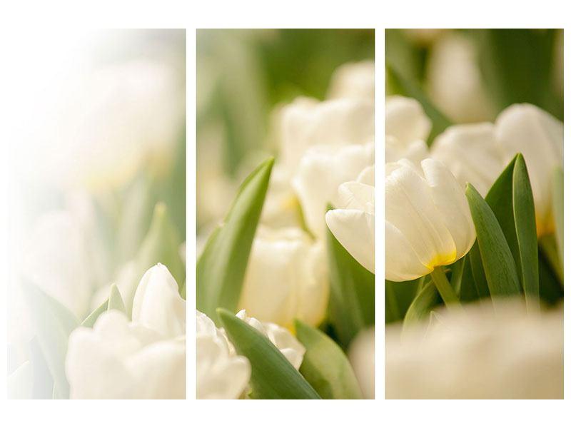 Leinwandbild 3-teilig Tulpenperspektive