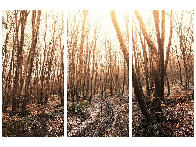 Leinwandbild 3-teilig Der kahle Wald