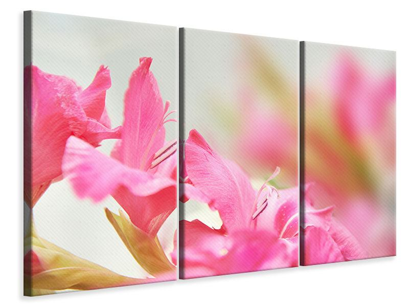 Leinwandbild 3-teilig Gladiolen
