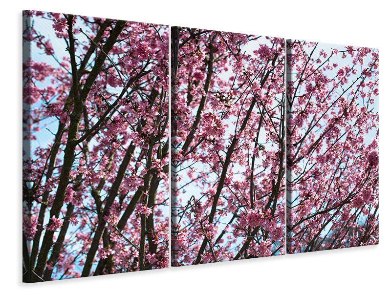 Leinwandbild 3-teilig Japanische Blütenkirsche