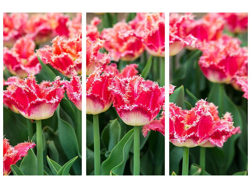 Leinwandbild 3-teilig Die Tulpenwiese