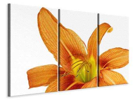 Leinwandbild 3-teilig Die Tiger-Lilie