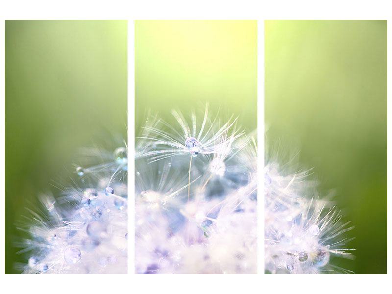 Leinwandbild 3-teilig Pusteblume XL im Morgentau